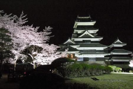 松本城夜桜1