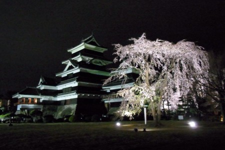 松本城夜桜