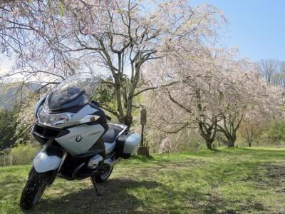 三多気の桜2