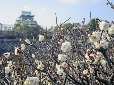 大阪城梅林4