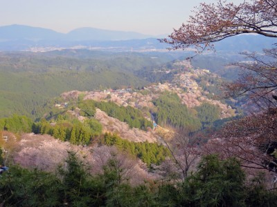 吉野山(去年)